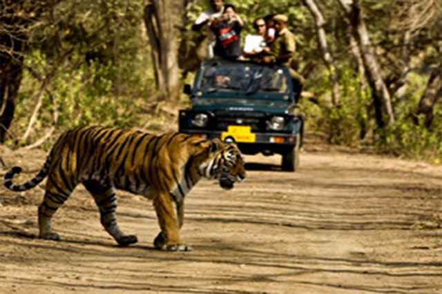 Wild Life Tour Package, Haridwar Tour Packages