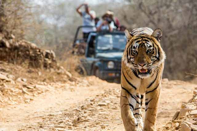 Wildlife Tour Package in Uttarakhand